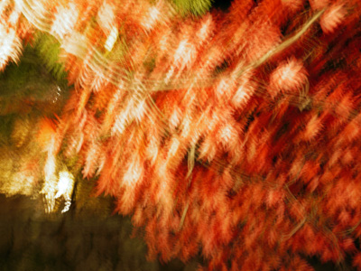 01紅葉ライトアップ