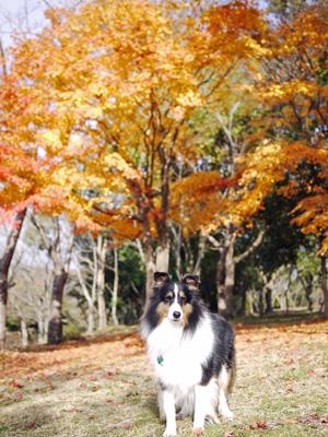 01公園の紅葉