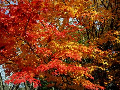 03公園の紅葉