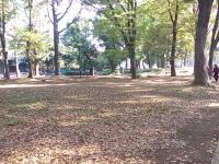 上野公園秋