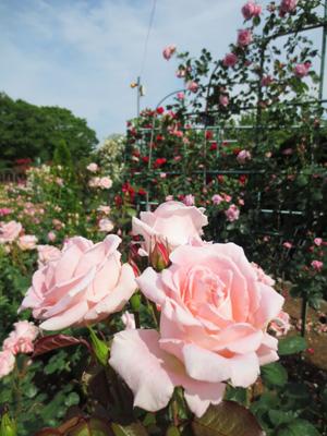 神奈川県立フラワーセンター 大船植物園