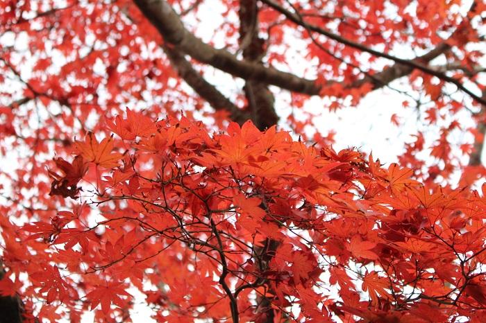 源氏山公園7