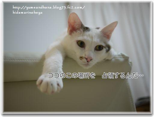 1-m3KrgjL_BaYDxnS1357219778_1357219905.jpg