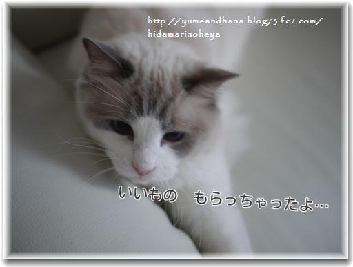 1cN_xcJ_AIrAZSbE1356365258_1356365311.jpg