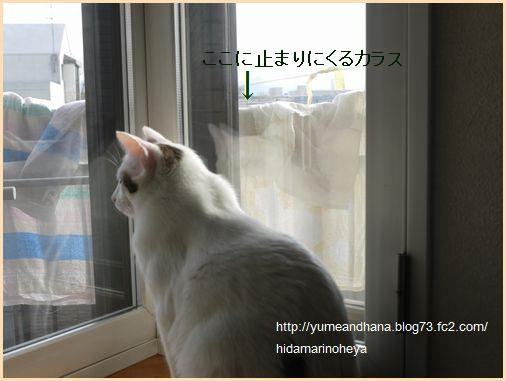 ココがカラスを見ている120530