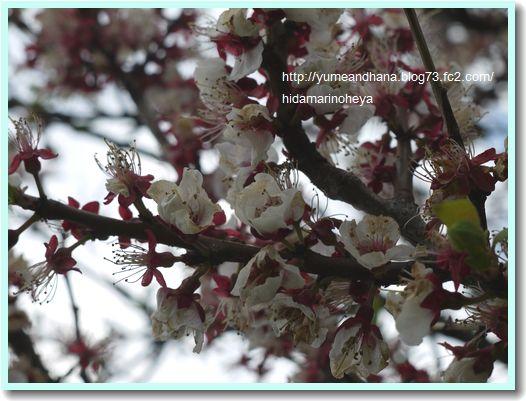 桜1204083