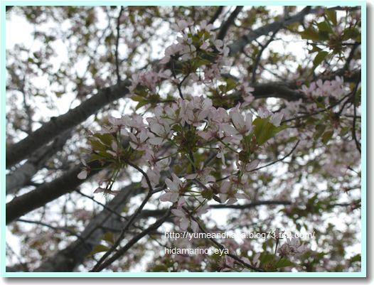桜1204082