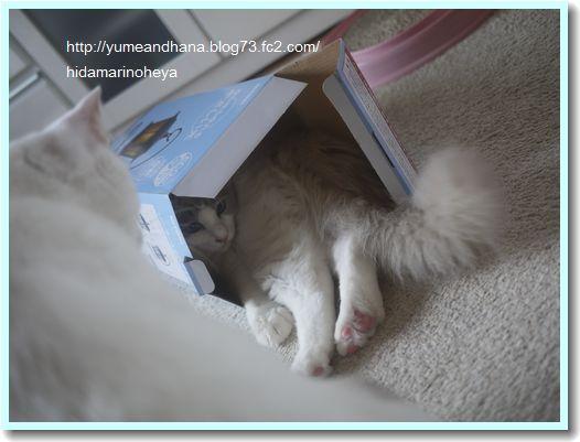 箱のベルたん120522