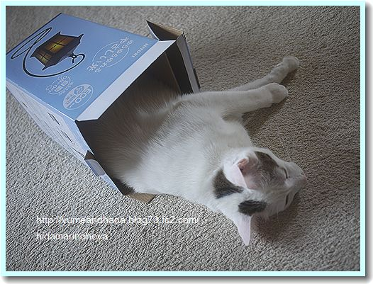 箱のココ1205222