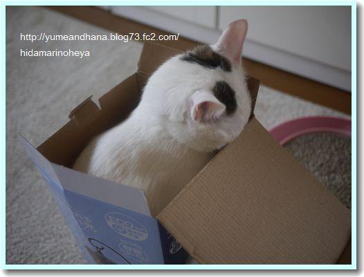 箱のココ1205221