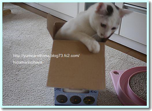 箱のココ120522