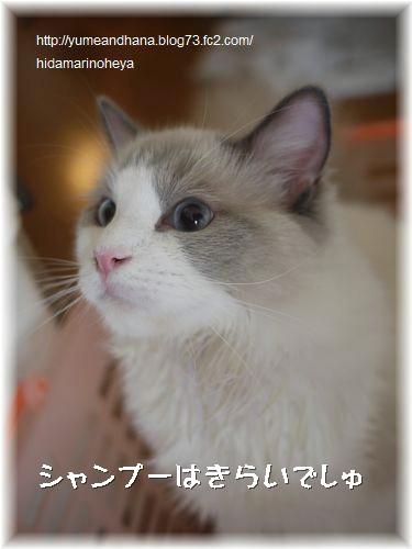 あごニキビ1206091