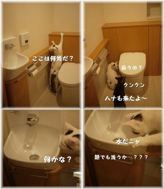 ココとトイレ120622