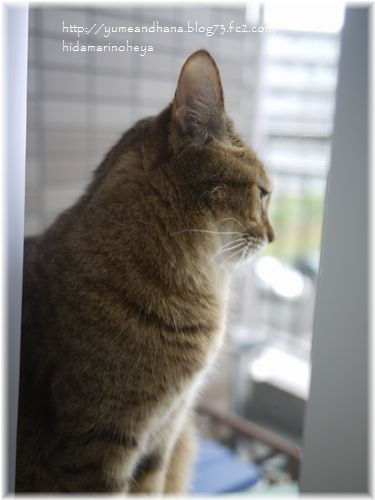 窓辺のモカ120802