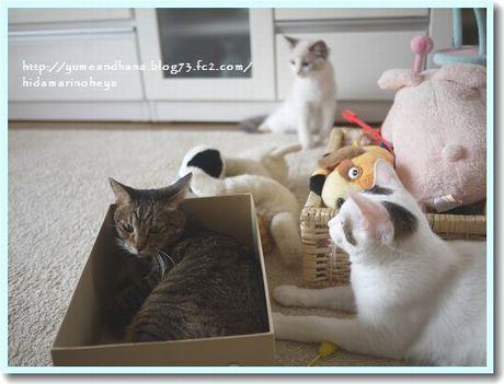 箱はハナのもの120103