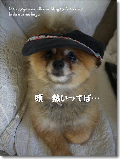 帽子ゆめ120904