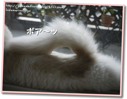 しっぽボア~1209112