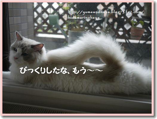 しっぽ1209113