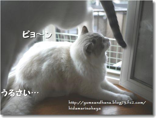 ココベル窓辺④1209112