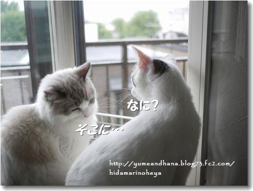 ココベル窓辺③120911