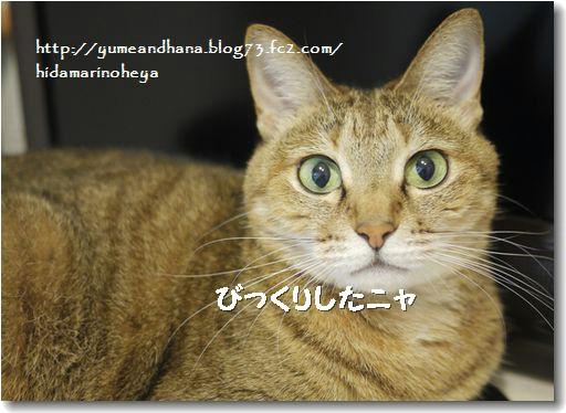 モカも心配20120915