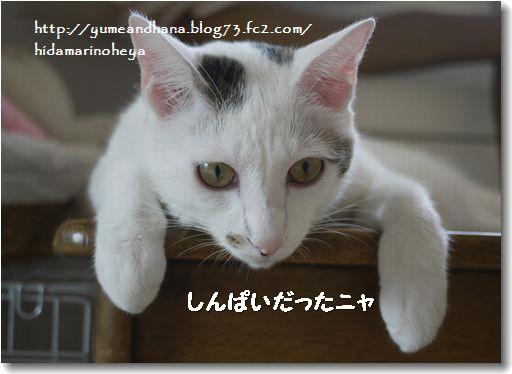 ココも心配20120915