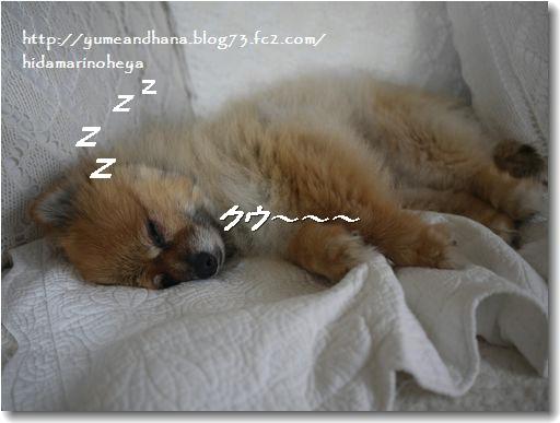 ゆめ熟睡20120915