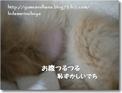 ゆめのお腹20120915