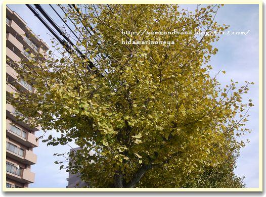 いちょうの葉②1211056