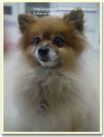 モデル犬121107009