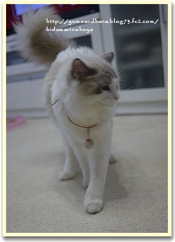 モデル猫121107110