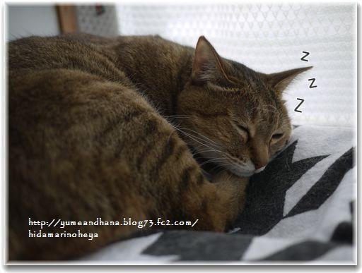 寝てるモカ12110601