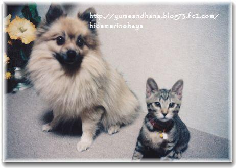 ロッキーとハナ20121201