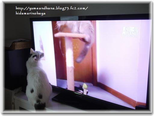 1テレビの猫121222