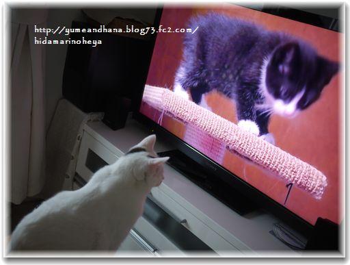 1テレビの猫②121222