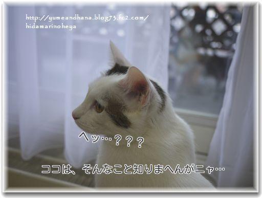 3_j9HR4ILyCAeI191355140745_1355141144.jpg
