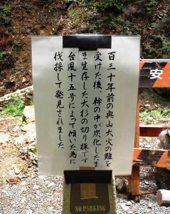 火防半僧杉 (2)