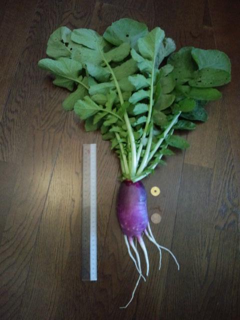 サツマイモ大根3