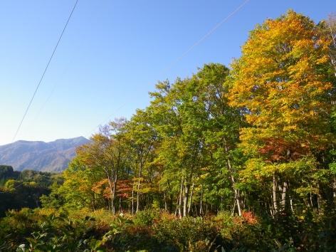 2014秋 のよさの里 紅葉