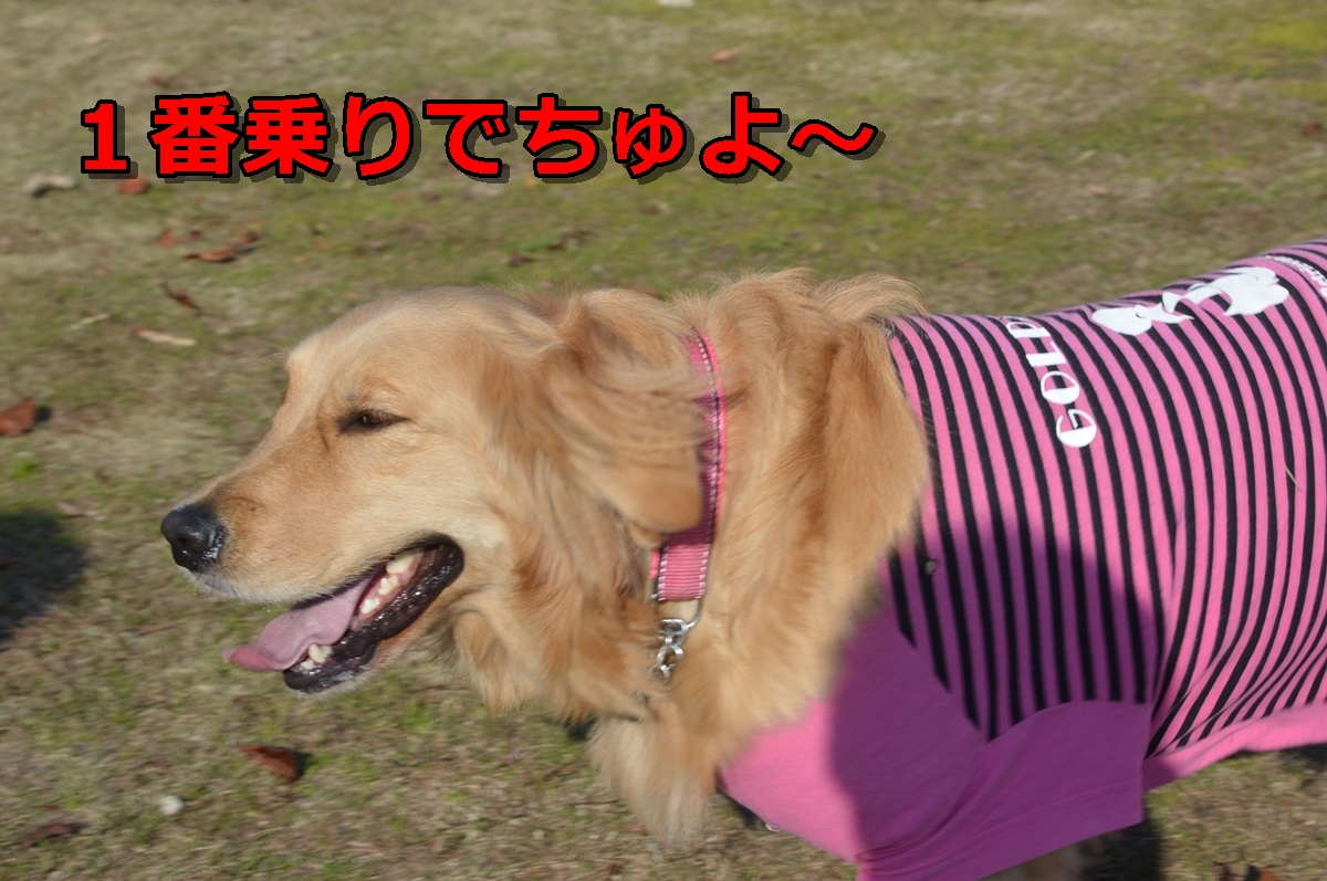 DSC_0544-001.jpg