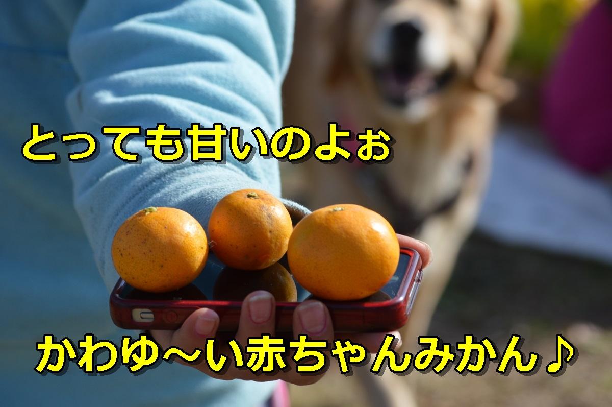 DSC_0682-139.jpg