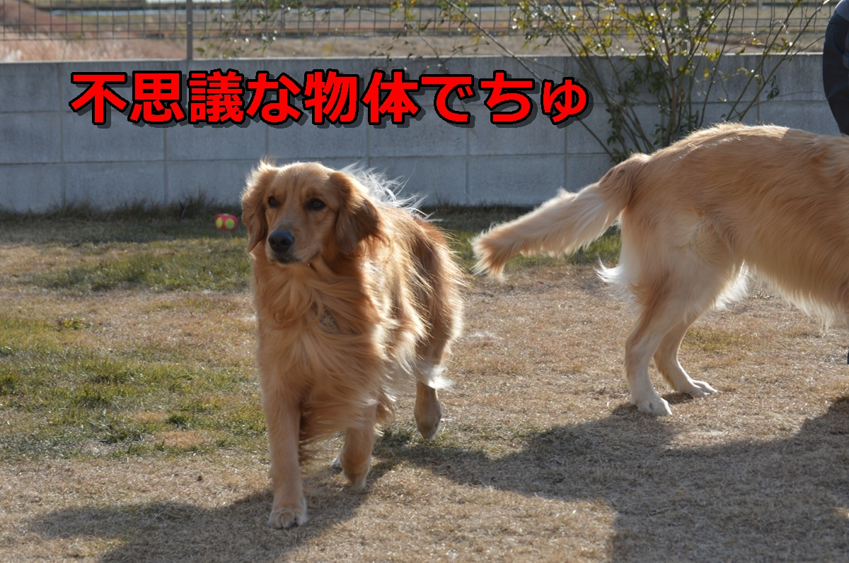 DSC_77-014.jpg