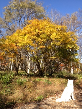 fc2blog_20121105184931c46.jpg