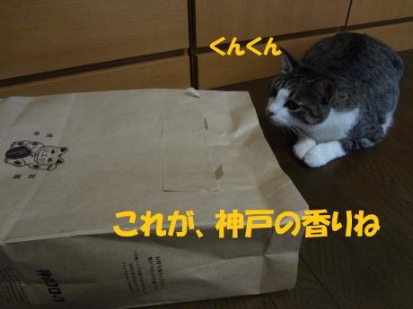 ・DSC01605_convert_20120825144209