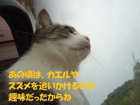 ・DSC01621_convert_20120827163043