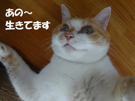 DSC01847縺ゅ・・枩convert_20120905154131