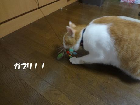 DSC01205繧ャ繝悶Μ_convert_20120911151427