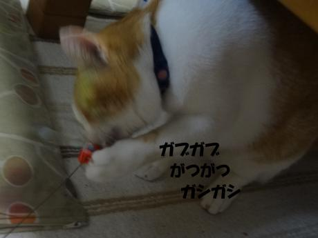 DSC01236繧ャ繝悶ぎ繝棒convert_20120911151604