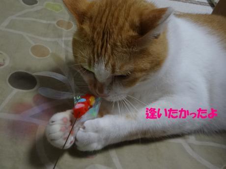 DSC01245縺ゅ>縺溘°縺」縺歙convert_20120911151742