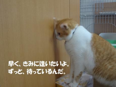 DSC01899縺セ縺」縺ヲ縺・k_convert_20120911145221